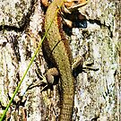 Common Lizard by LydiaWoods