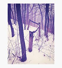 Forest Fence Photographic Print