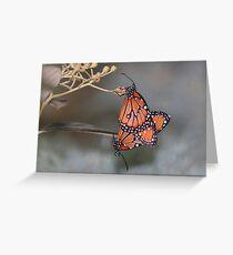 Queen butterflies mating Greeting Card