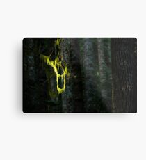 Hanging - Boulder River Wilderness, Washington Metal Print