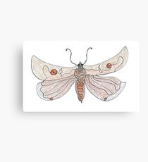 The Endangered Austyn Teal Moth (one-line #123) Canvas Print