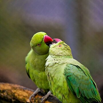 Love Birds by chaisetaylor