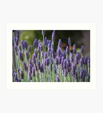 Lavender love Art Print