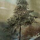 Just a tree by Karen Havenaar