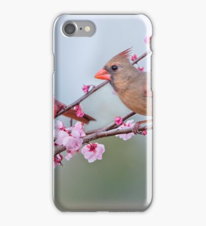 Cardinals on Blossoming Branches iPhone Case/Skin