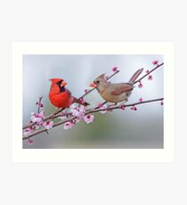 Cardinals on Blossoming Branches Art Print