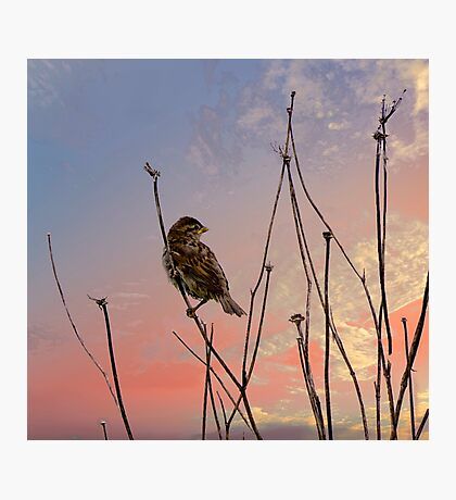 """""""Not a sparrow falls unknown to God's eye."""" Photographic Print"""