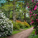 Azaleas & Rhododendrons by vivsworld