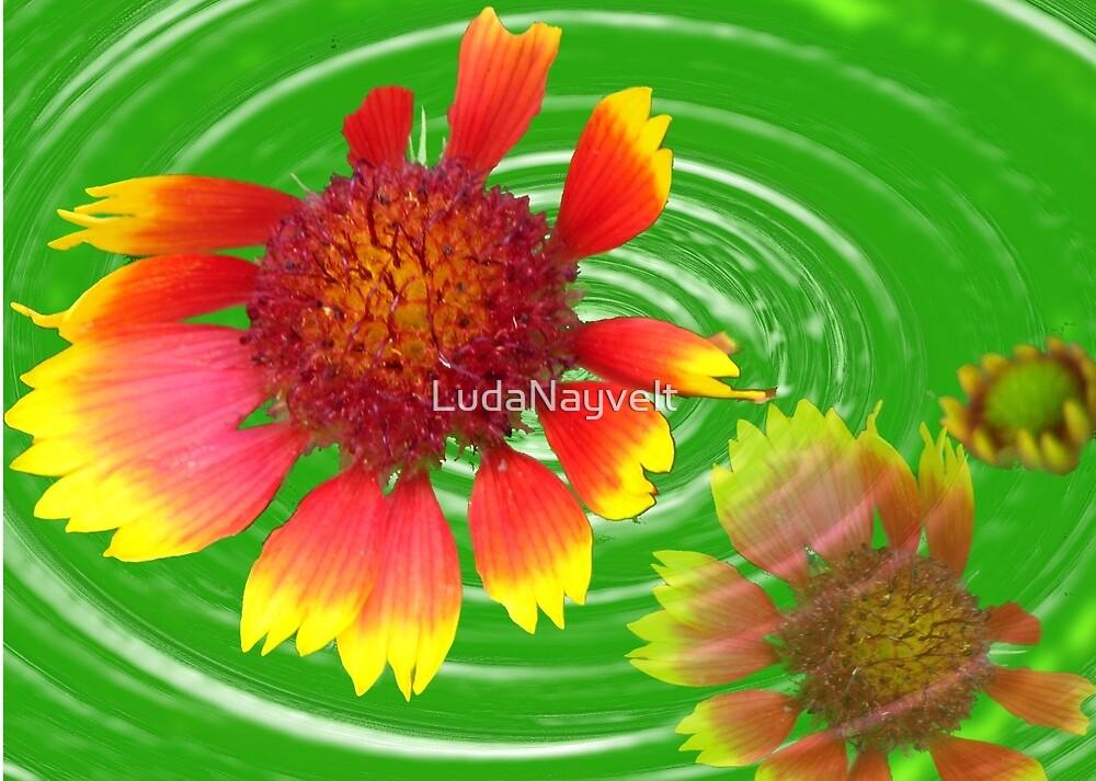 FLOWERS  by LudaNayvelt