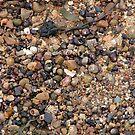 Seashells In Shallow Water by Richard Winskill