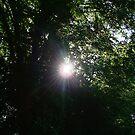 Sun Through The Trees by Richard Winskill