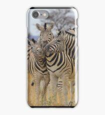Zebra - African Wildlife Background - Love to Feel iPhone Case/Skin