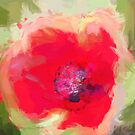 Poppy art by David Tovey