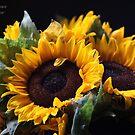 Sunflower Bridal Bouquet. by Andrzej Goszcz . 17/07/2016. by © Andrzej Goszcz,M.D. Ph.D