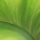 Green Leaf by CarolM