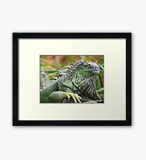 Bearded Iguana Framed Print