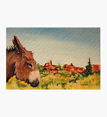 Cripple Creek Donkey~Colorado Photographic Print
