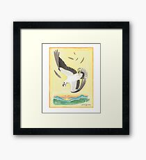 White-bellied Sea-eagle Framed Print