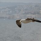 Seagull in Flight over Naples by Keith Richardson