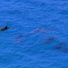 Dolphin Pod by Truenature