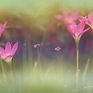 dreamy garden by lensbaby