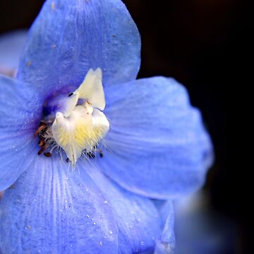 Blue Delphinium flower by InspiraImage