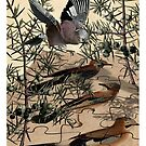 A Jay Jostles In Juniper by RichardSmith