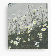 Daisy Film Canvas Print