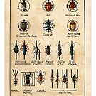 Beetle / Valve Symbols by RichardSmith
