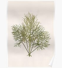 Pressed Dill Poster