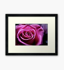 Soft Pink Rose Macro Framed Print