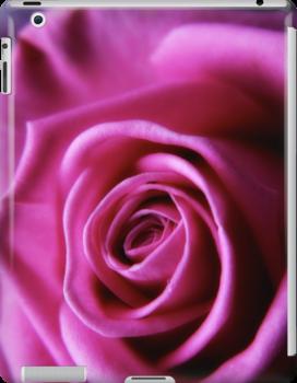 Soft Pink Rose Macro by Vicki Field