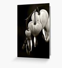 Bleeding Hearts (Dicentra) flowers in black and white Greeting Card