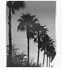 Black & White Palm Coast Poster
