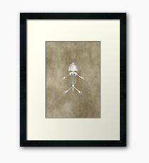 Amphibian Fossil Framed Print