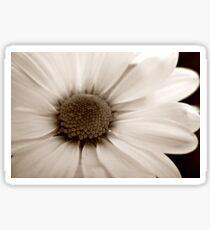 White Chrysanthemum sepia flower Sticker
