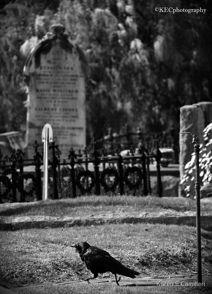 Scared Crow by Karen E Camilleri