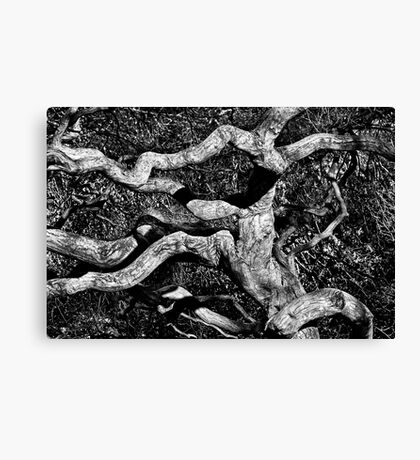 Twisted Limbs Canvas Print
