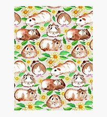 Guinea Pigs and Daisies in Watercolor Photographic Print