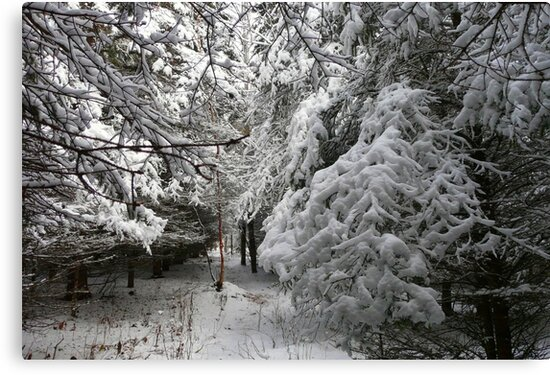 A Walk In The Snowy Forest by MaeBelle