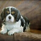Puppy Perfect by Clare Colins