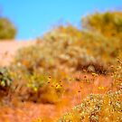 Desert Bushes on a Bike Trail  by Alemay