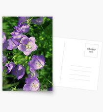 Summer Bliss II Postcards