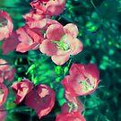 Summer Bliss by Stephanie Rachel Seely