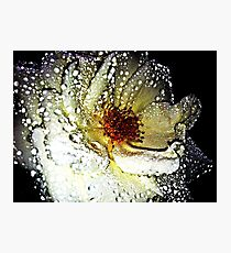 Evening Rose Photographic Print