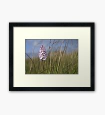 Spotted Orchid,  Portnoo, Co. Donegal Framed Print