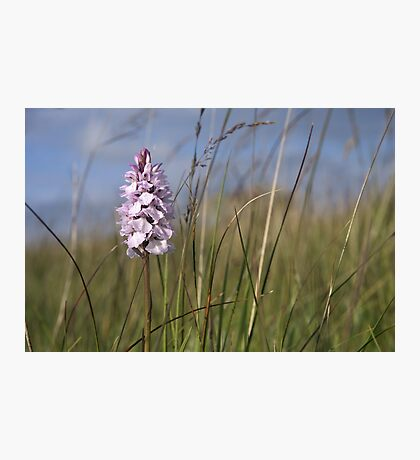 Spotted Orchid,  Portnoo, Co. Donegal Photographic Print