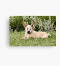 Kit is our Diva Canvas Print