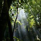 Sun Rays by Ed Stone