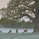 Full Moon - Bushy Park, London by Kasia Nowak